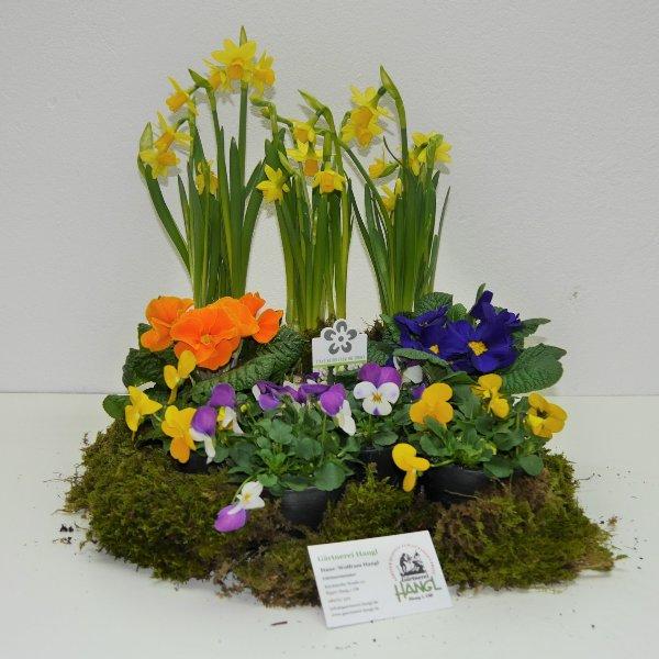 Frühlingsmix- Kiste 1 Bild 1