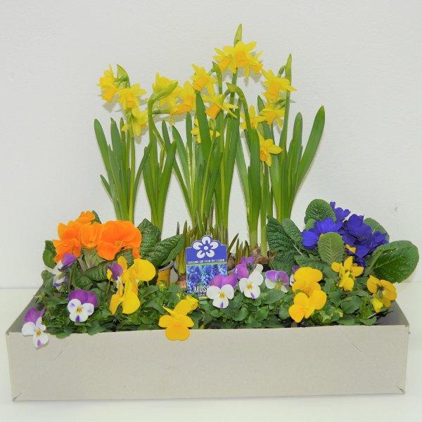 Frühlingsmix- Kiste 1 Bild 2
