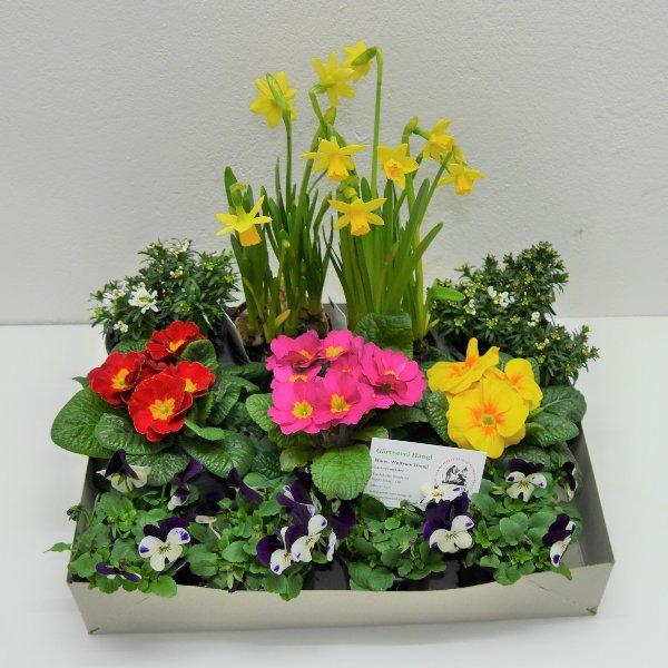 Frühlingsmix- Kiste 3 Bild 1