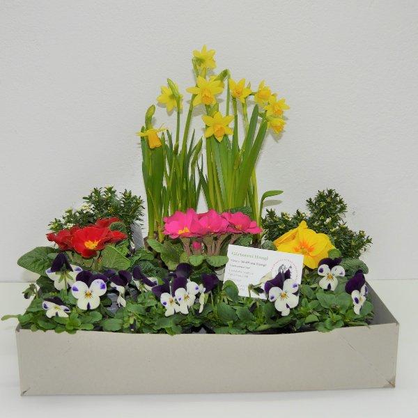 Frühlingsmix- Kiste 3 Bild 2