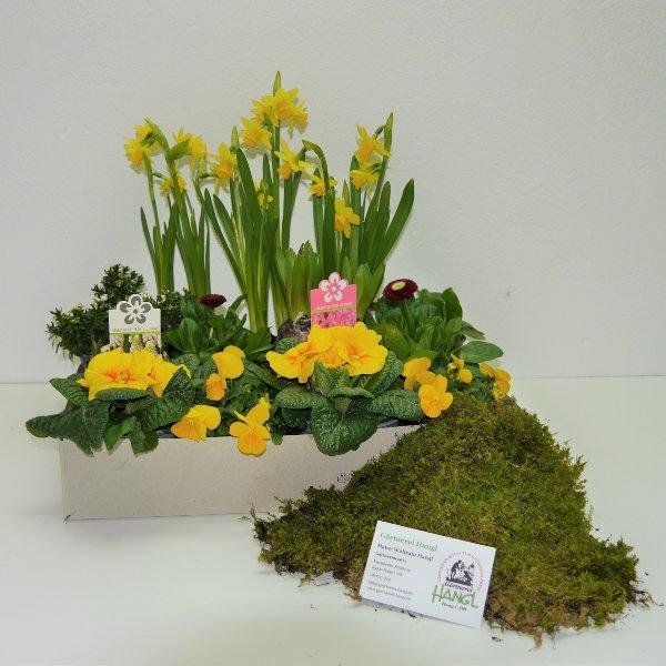Frühlingsmix- Kiste 4 Bild 1