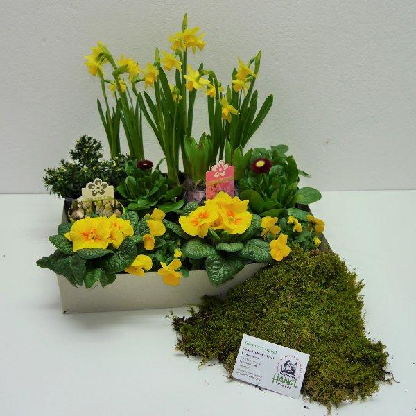 Frühlingsmix- Kiste 4 Bild 2