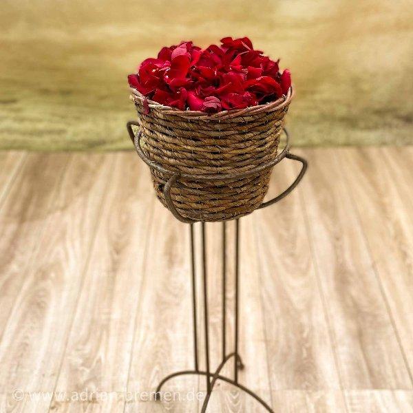 Rote Nachwurf-Rosenblüten Bild 1