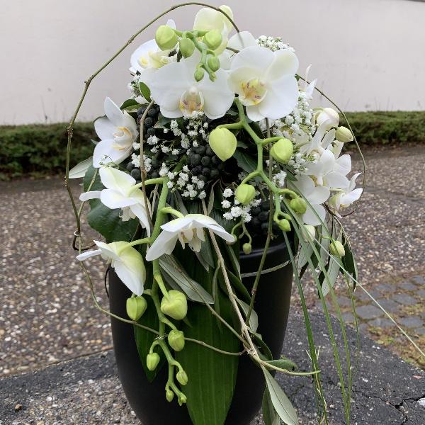 Phalaenopsis weiß Bild 1
