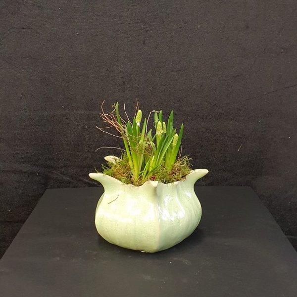 Frühlingsblüher im Keramikgefäß Bild 2
