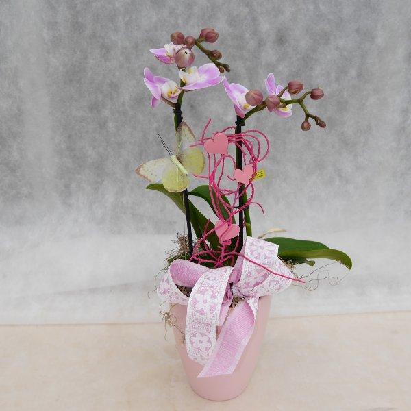 Orchidee 2 Risper aufdekoriert Bild 2