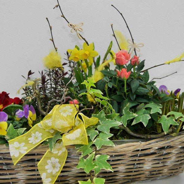 Frühlings- Schälchen Hiasl gepflanzt Bild 2