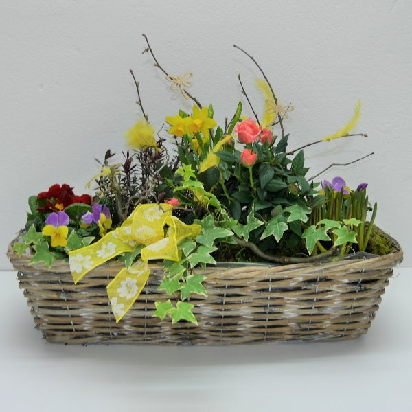 Frühlings- Schälchen Hiasl gepflanzt Bild 1
