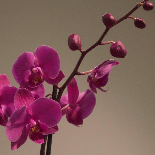 Ausgeschmückte Orchidee Bild 1