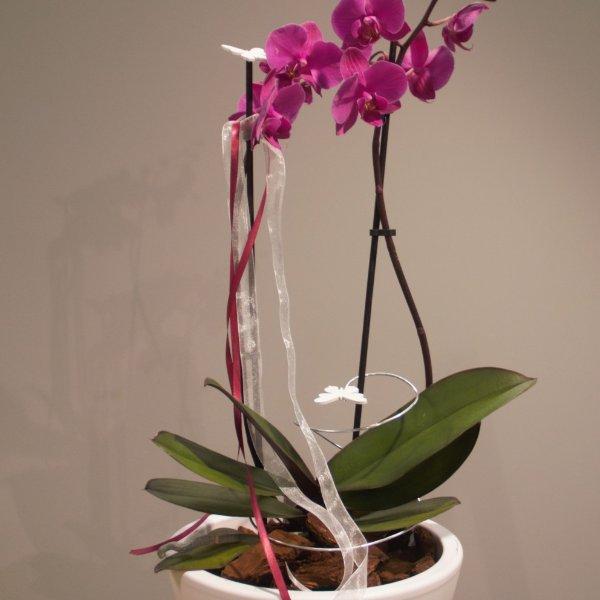 Ausgeschmückte Orchidee Bild 2