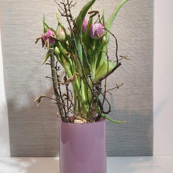 Gepflanzte Tulpen Bild 1