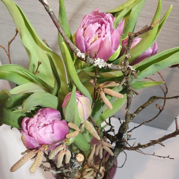 Gepflanzte Tulpen Bild 2