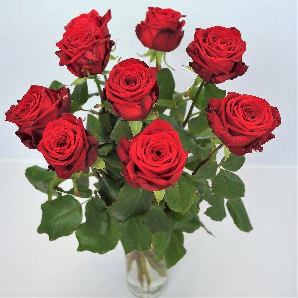 Rosen pur in versch. Farben Bild 1