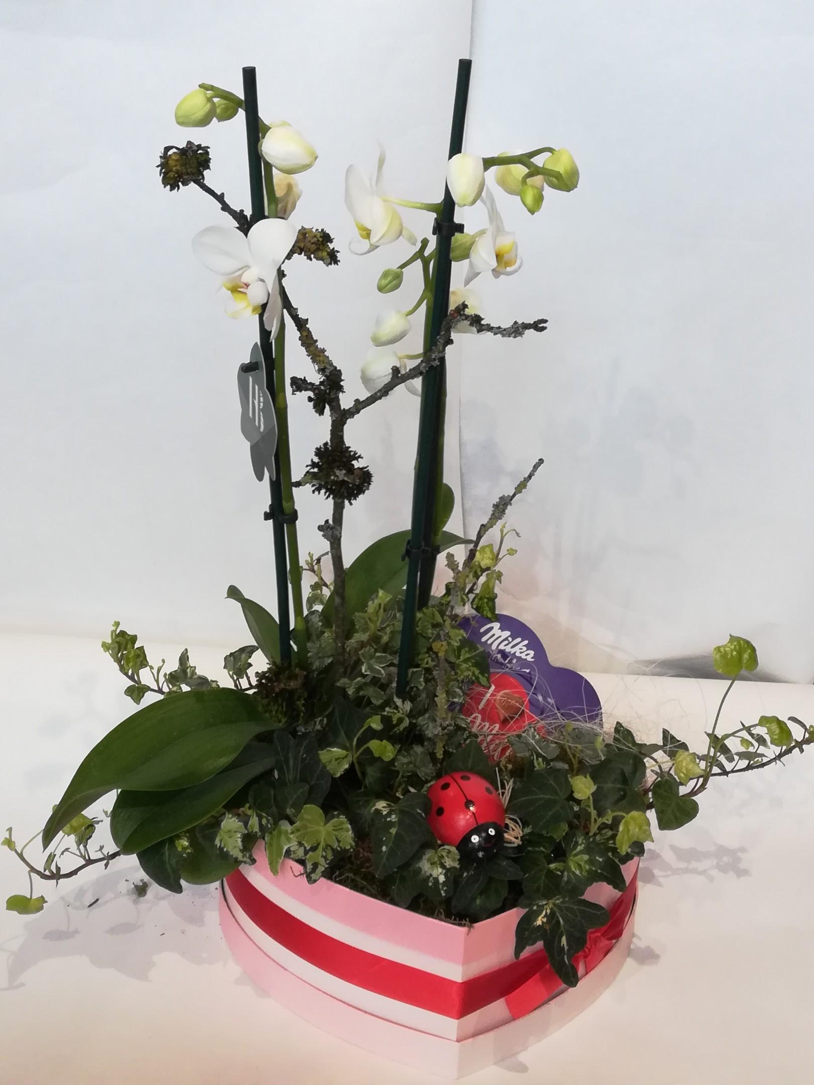V 10 bepflanztes Herz mit Phalaenopsis Bild 1