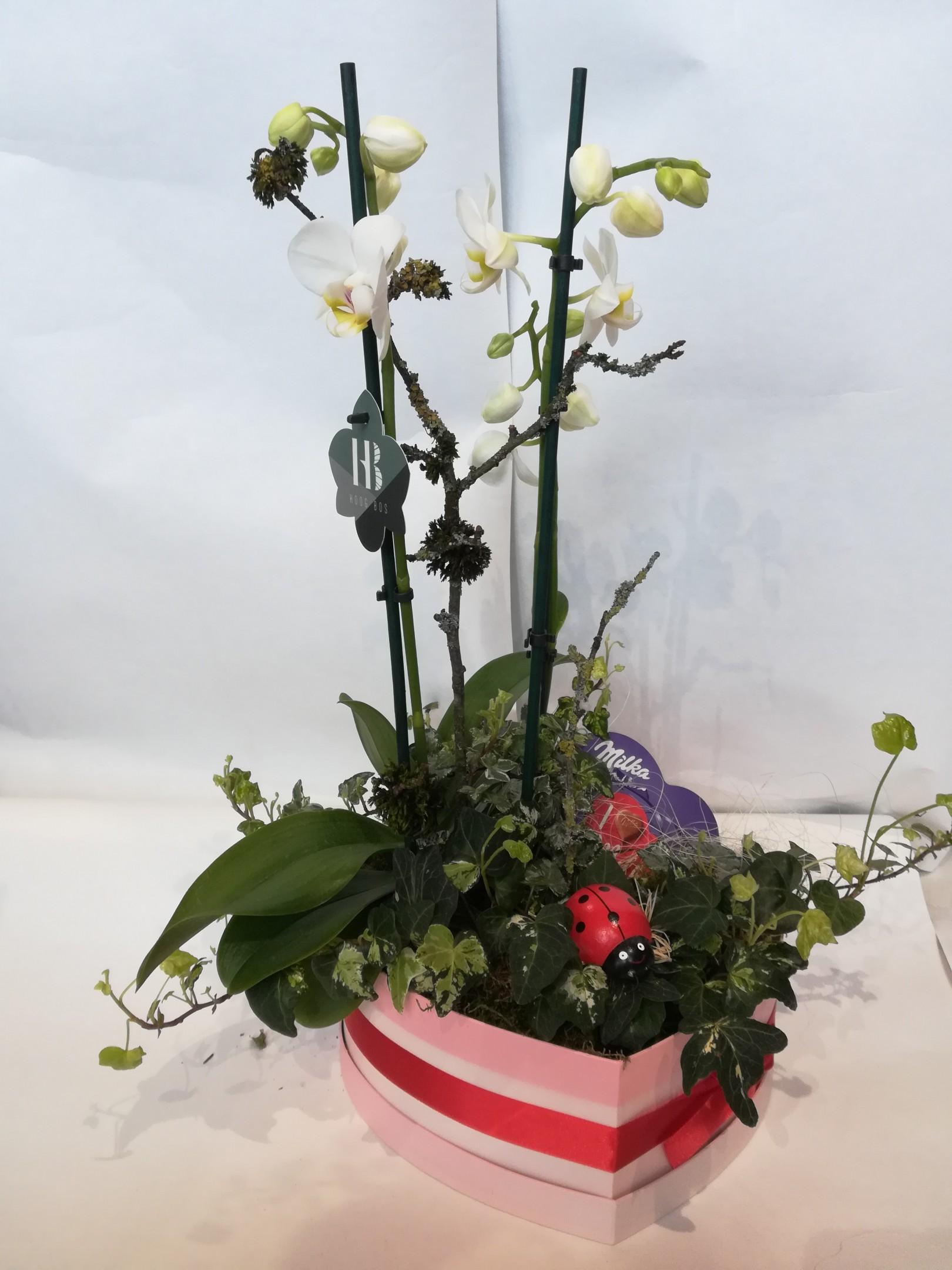 V 10 bepflanztes Herz mit Phalaenopsis Bild 2