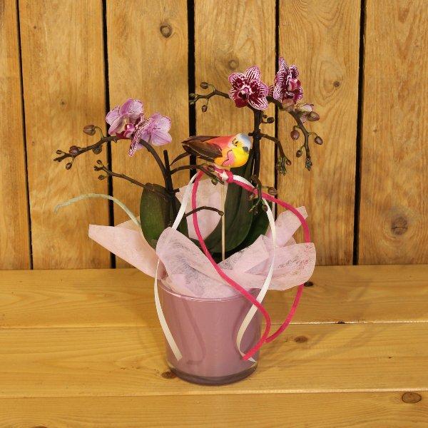 Orchidee ausgeschmückt Bild 1