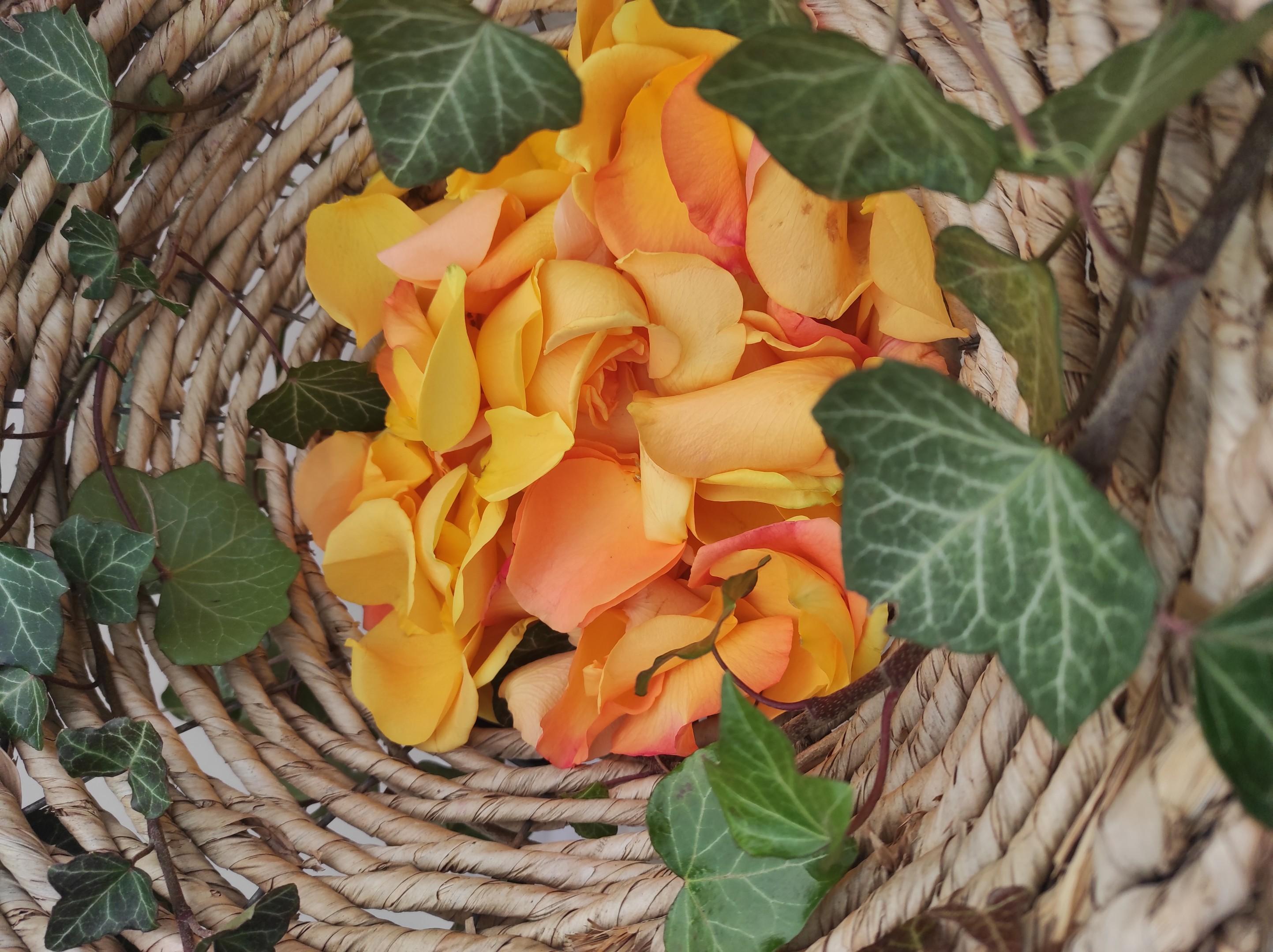 Rosenblüten zum Streuen Bild 3