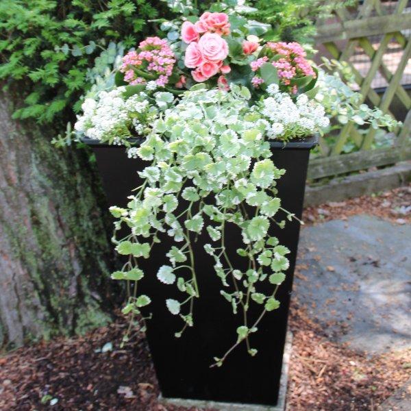Eingangs-Pflanzbox Bild 4