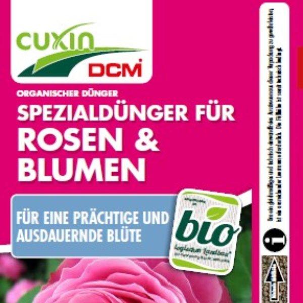 Rosen & Blumen Bild 1