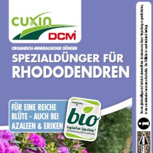 Rhododendren Bild 1
