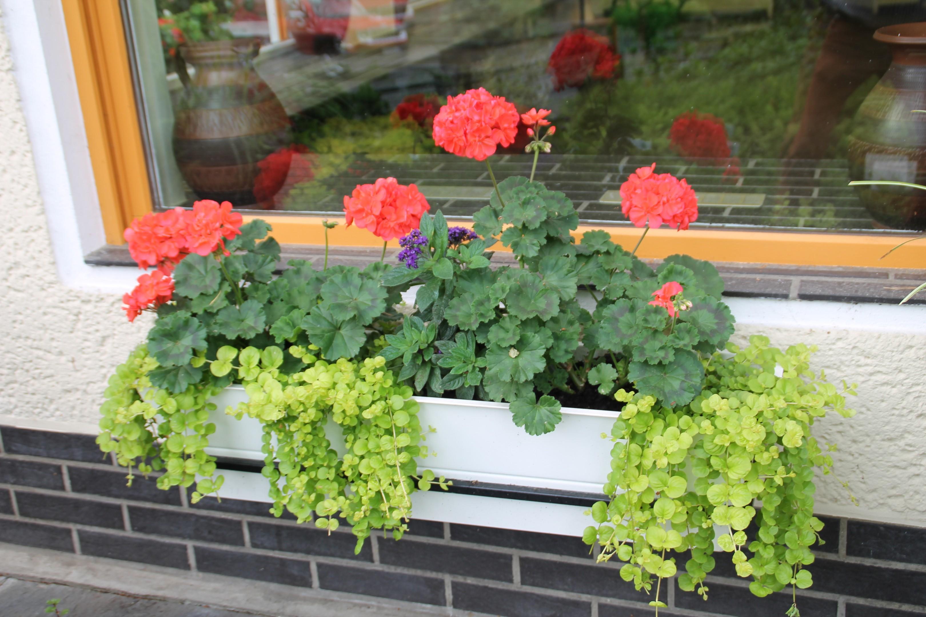 Balkonkasten Bild 3