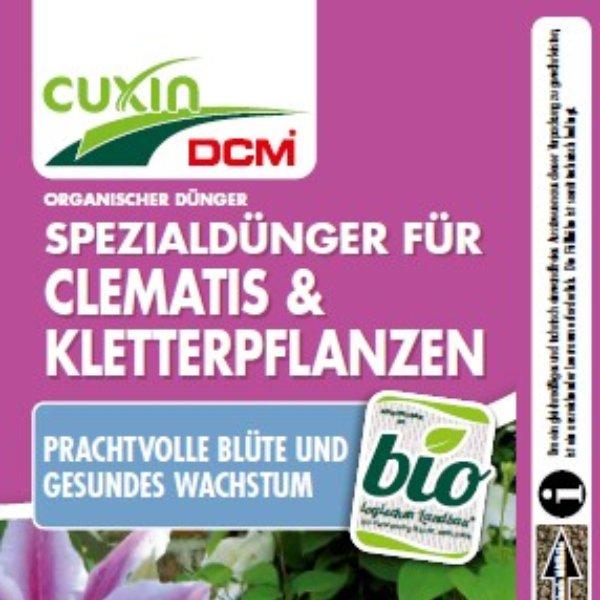 Clematis - Kletterpflanzen Bild 1