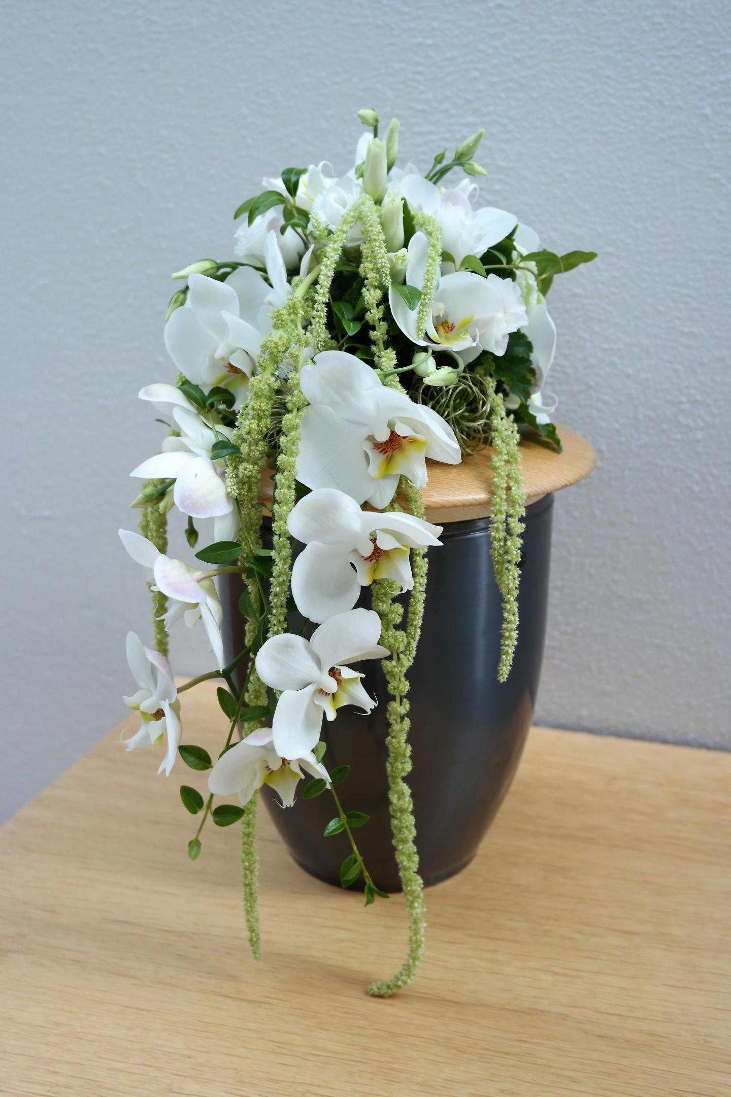 Weiße Orchidee Bild 2