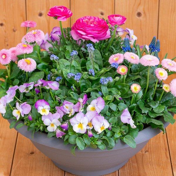 Frühlingsschale 2 Bild 1