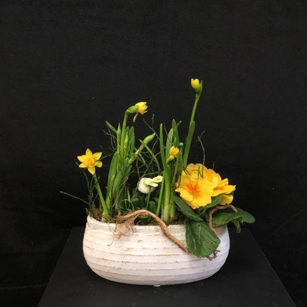 Frühlingsblüher im länglichen Gefäß Bild 1