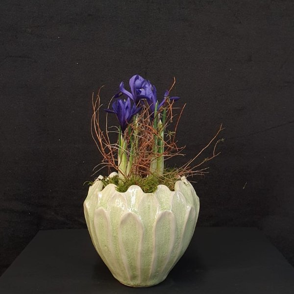 Iris im Blattgefäß Bild 1