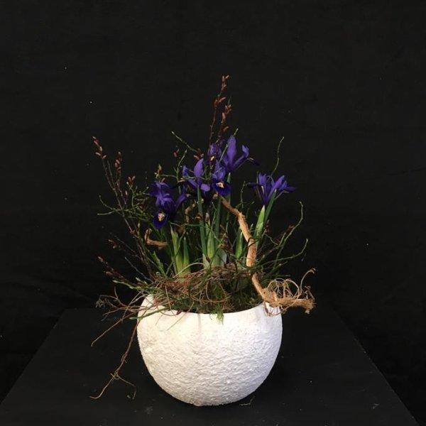 Verschiedene kleine Frühlingsblüher Bild 3