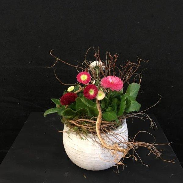 Verschiedene kleine Frühlingsblüher Bild 1