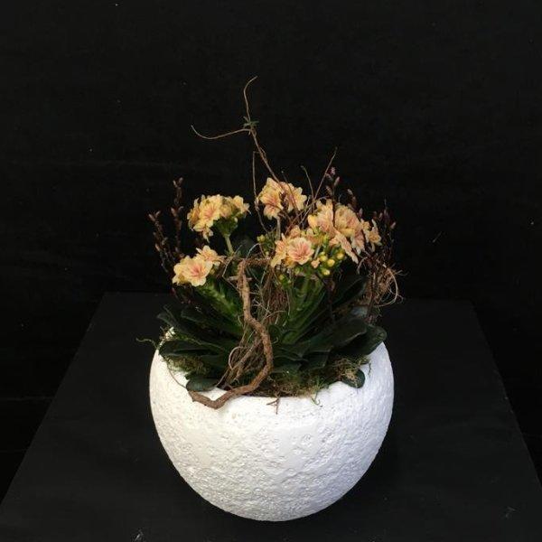 Verschiedene größere Frühlingsblüher Bild 2