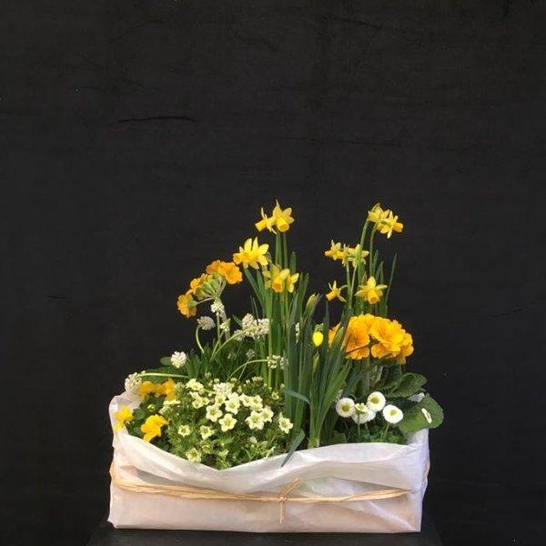 Gelbe Frühlingskiste Bild 1