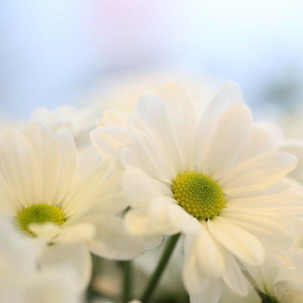Blumenstrauß Bild 3