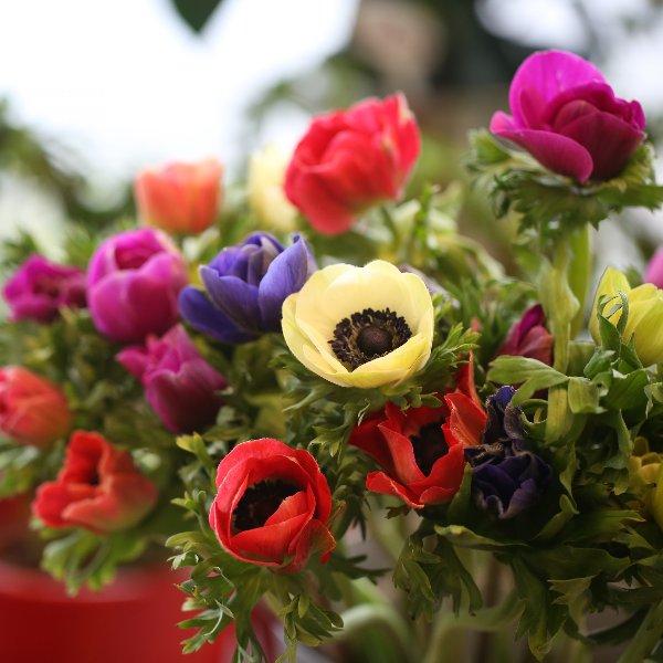 Blumenstrauß Bild 4