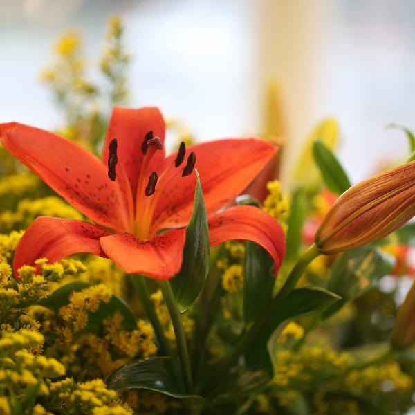 Blumenstrauß Bild 5