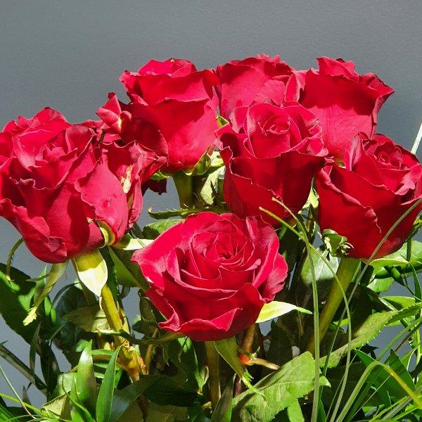 Rote Rosen Premium Bild 1