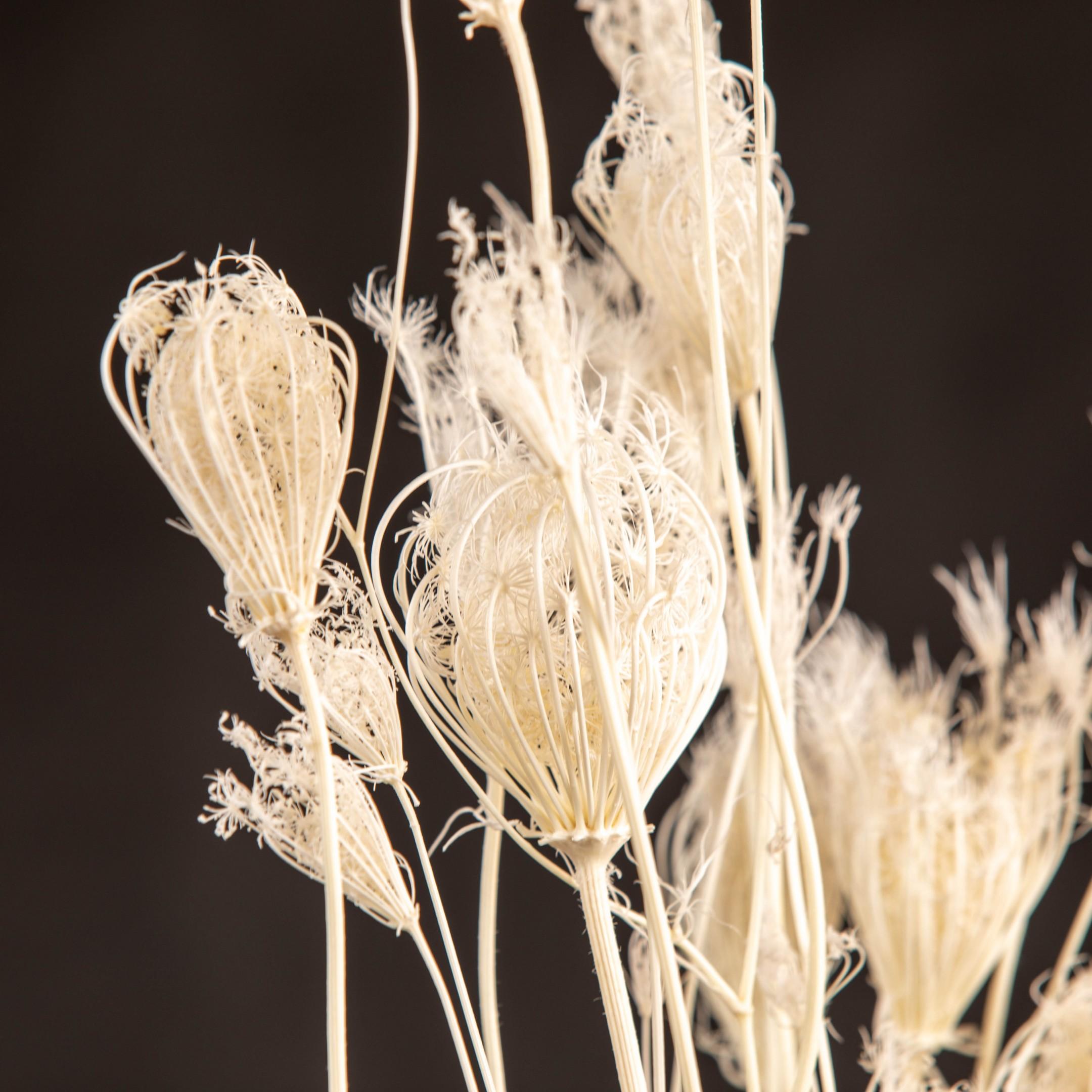 Trockenblumenbund black & white Bild 3