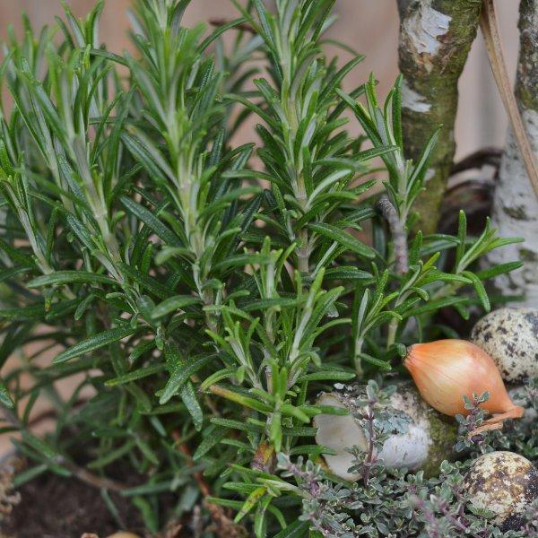 Kräuterkorb Bild 3