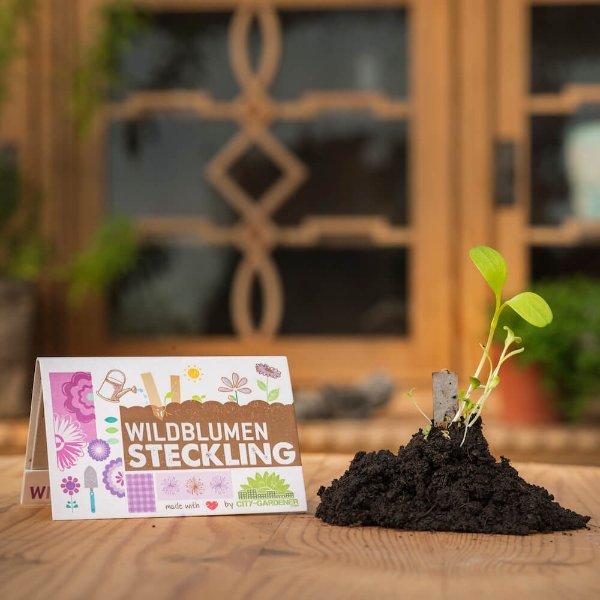 Steckling Wildblumen Bild 1