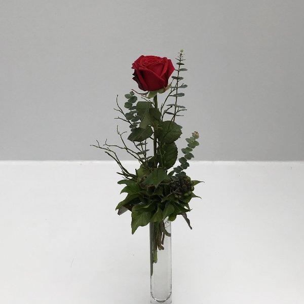 """""""Nur"""" eine Rose Bild 2"""