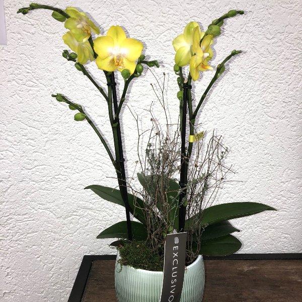 Orchidee - gelbblumig mit Übertopf Bild 1