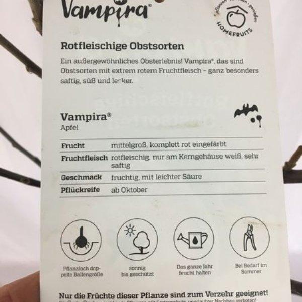 """Apfelbaum """" Vampira"""" Bild 3"""