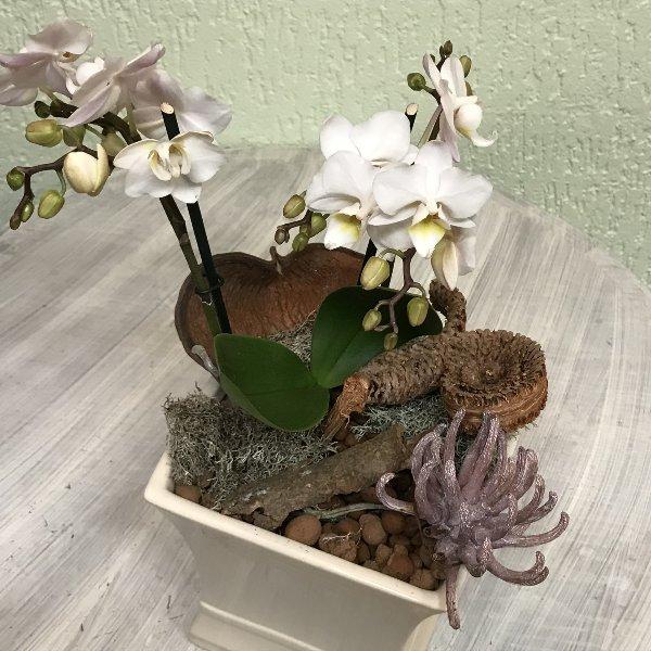 Weiße Orchidee geschmückt Bild 1