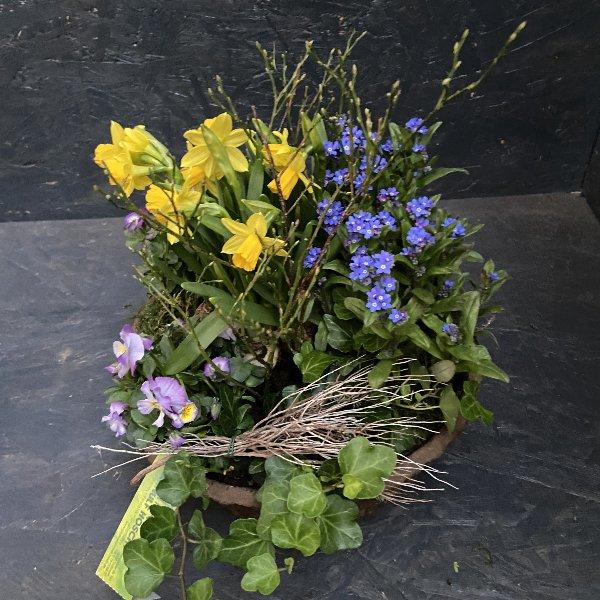 Kompostierbare Schale, frühlingshaft bepflanzt Bild 1