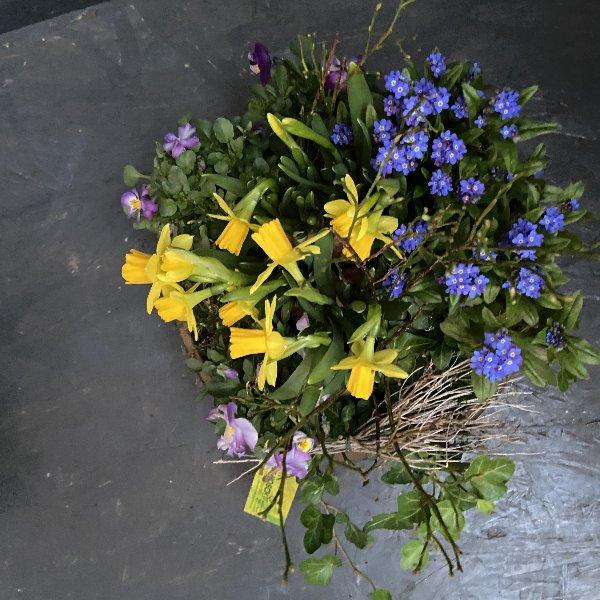 Kompostierbare Schale, frühlingshaft bepflanzt Bild 2