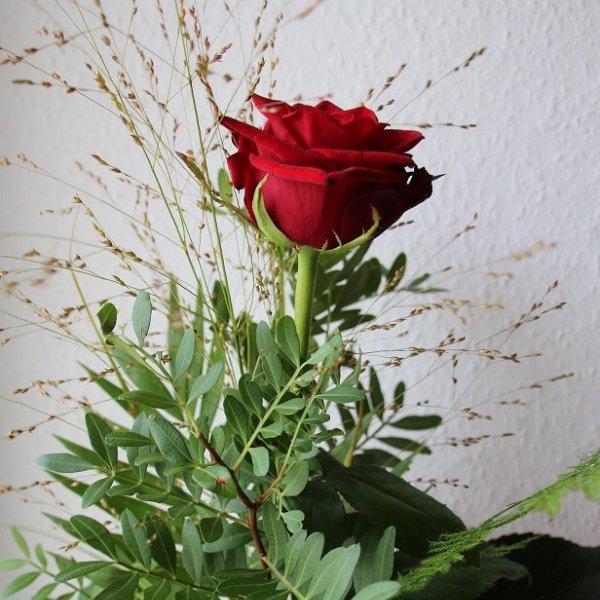 Rose einzel toll gebunden Bild 1