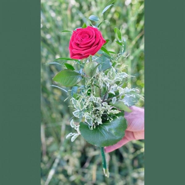 """""""Nur"""" eine Rose Bild 1"""