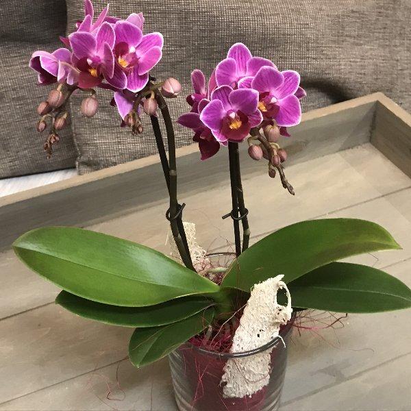 Kleine Orchidee im Glas Bild 1